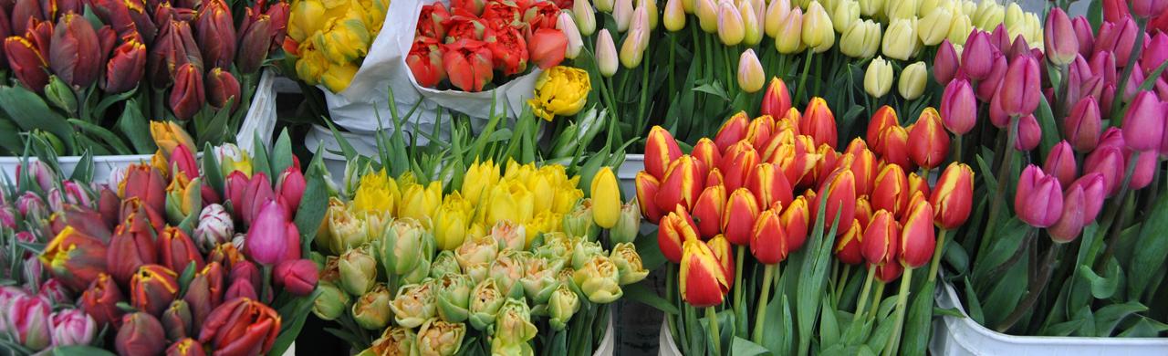 Bellingham Farmers market tulips